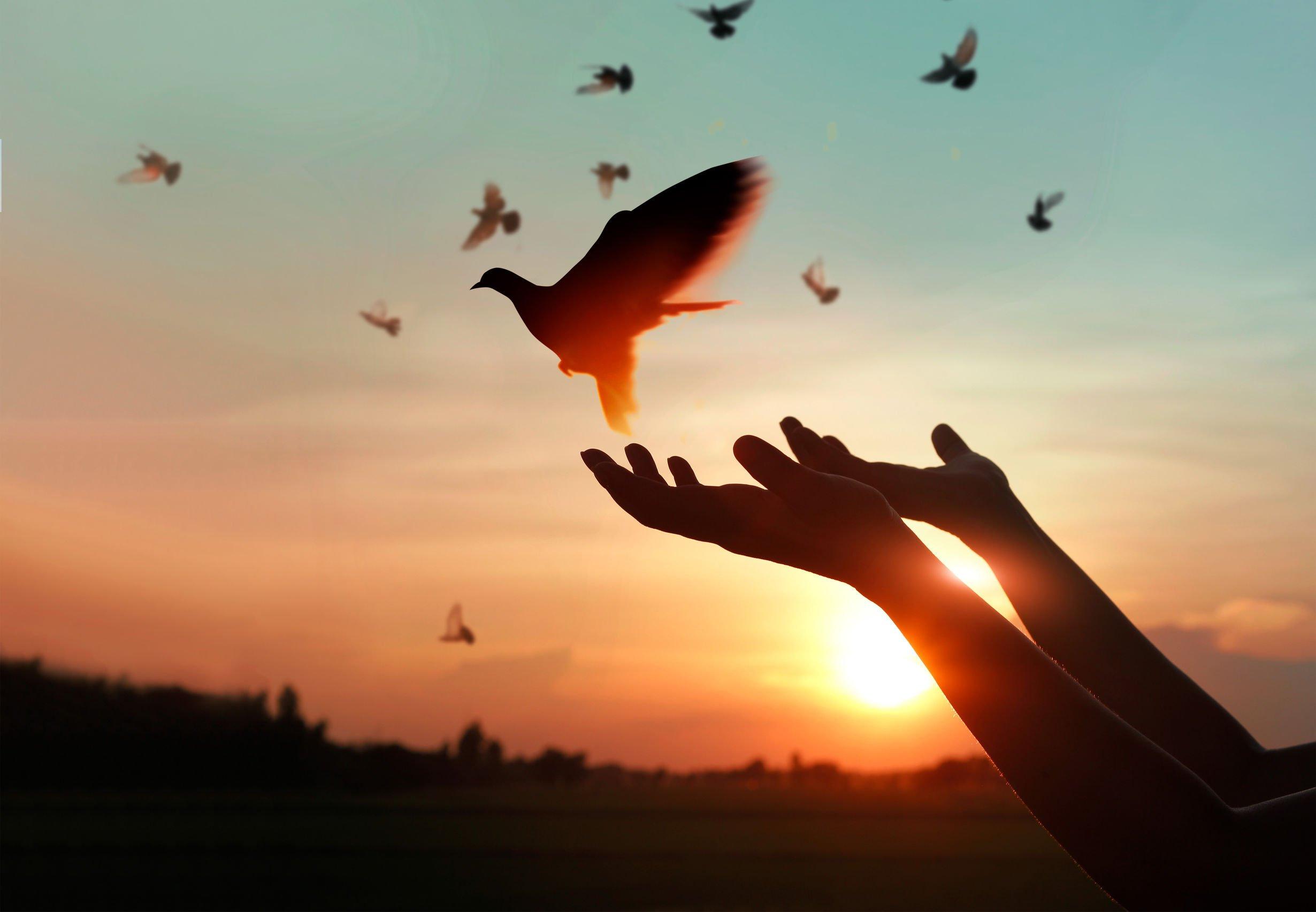 Friede sei mit dir